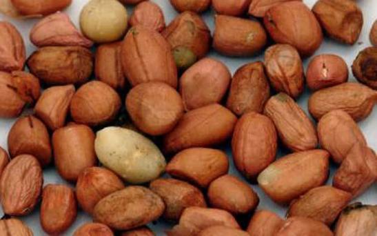 peanuts_1567923b
